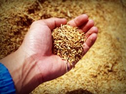 abundance-agricultural-agriculture-226615