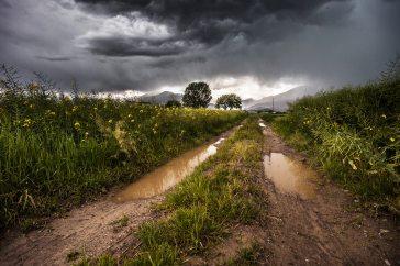 country-lane-field-meadow-1551