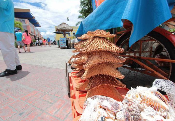 Comercio de estrellas de mar y caracol, México. FotoGustavo Villegas-SIPSE