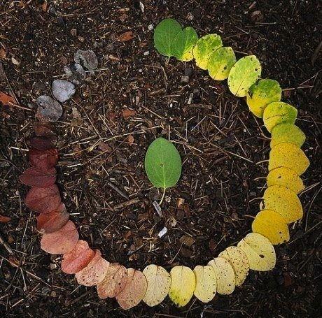 ciclo de vida de una hoja