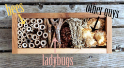 little bug hotel 2