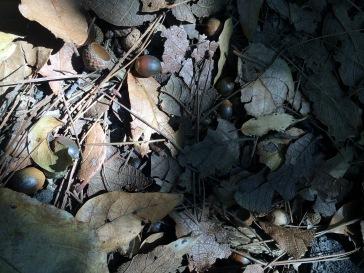 suelo de bosque